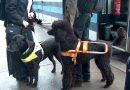 Укравшая собаку-поводыря осуждена на 1,5 года